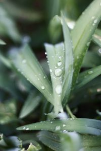 Aloe vera gel for dry skin