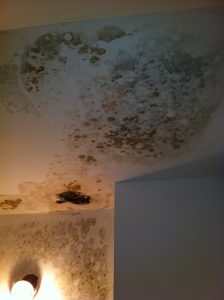 Toxic mold on the ceiling and wall
