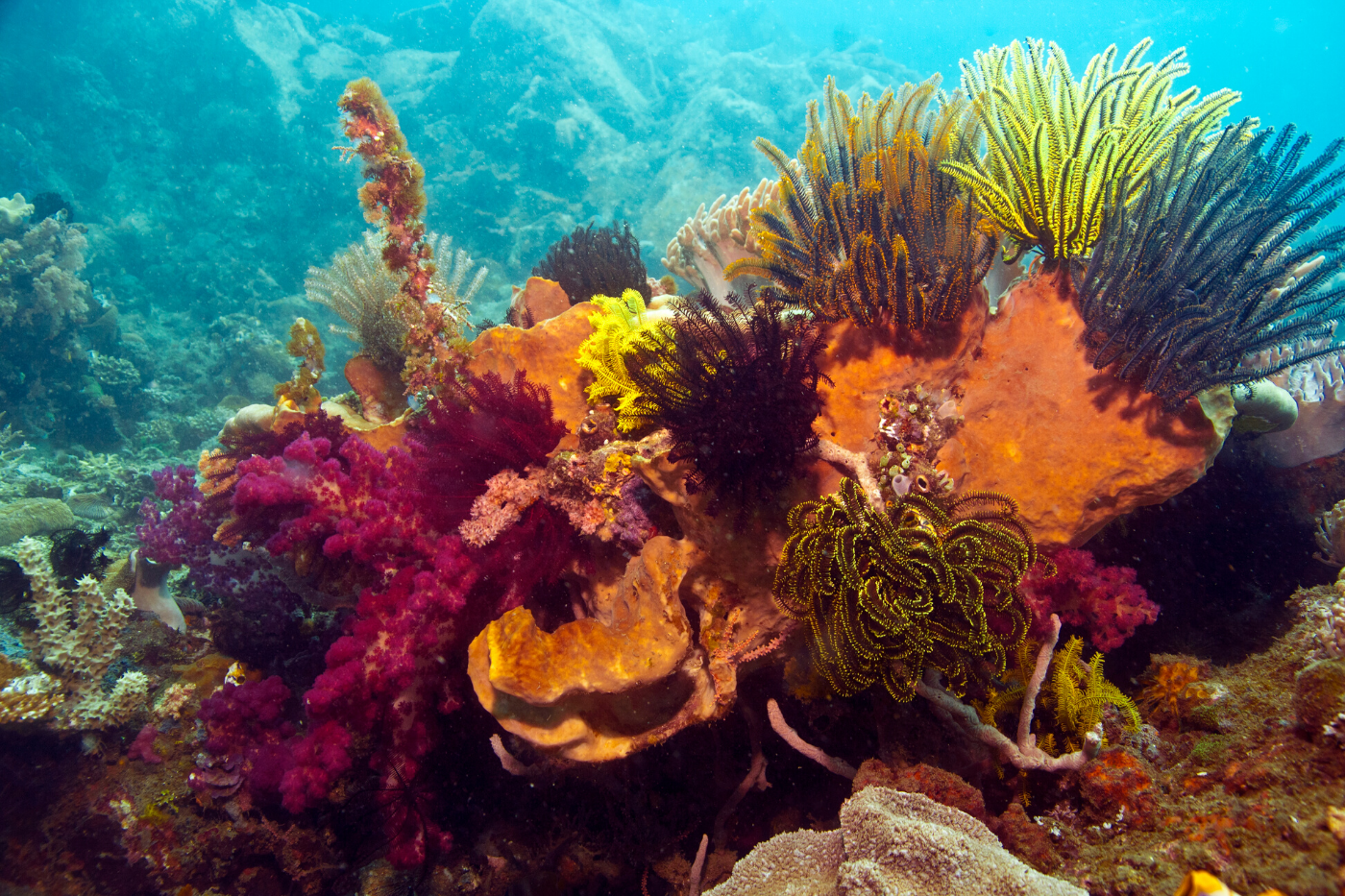 sunscreen must be reef-friendly